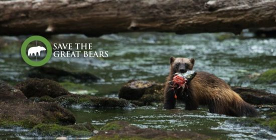 next step for safeguarding large carnivores in the great bear rainforest