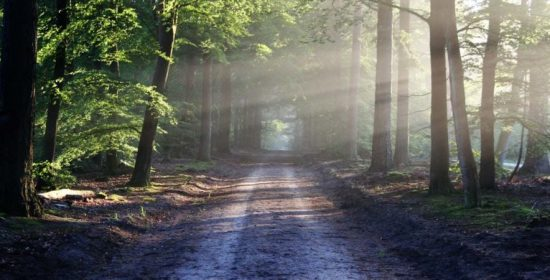 persistence optimism and walking again