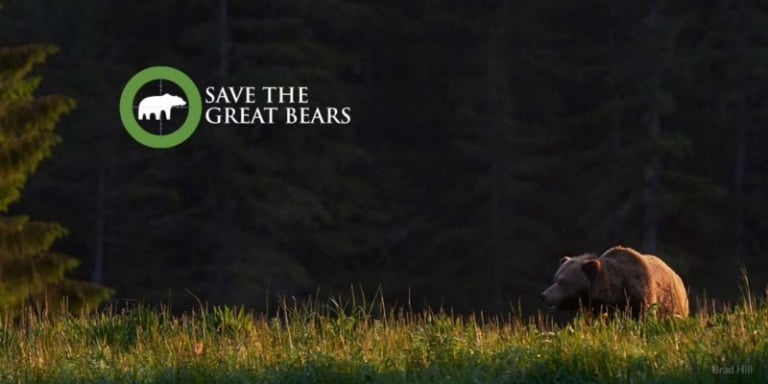 Save the Great Bears campaign update