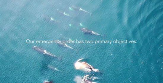 a killer whale emergency