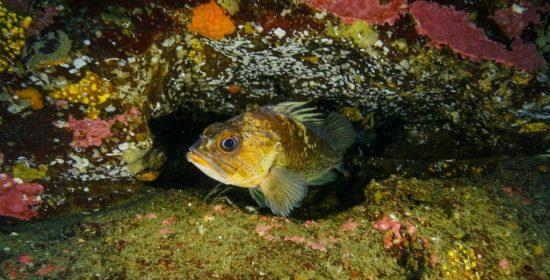 deep sea expedition