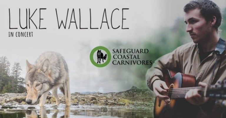 Live performances by musician Luke Wallace