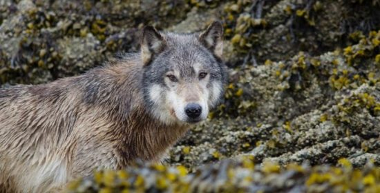 new study casts doubt on scientific basis of wildlife management in north america offers a way forward