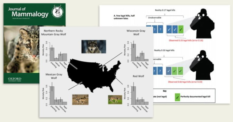 Mismeasured mortality: correcting estimates of wolf poaching in the United States