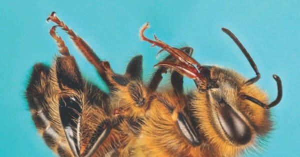 """Beyond the Honeybee"" wins magazine award"