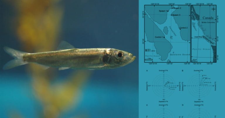 Pacific herring spawn events influence nearshore subtidal and intertidal species