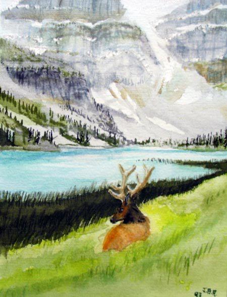 alberta elk