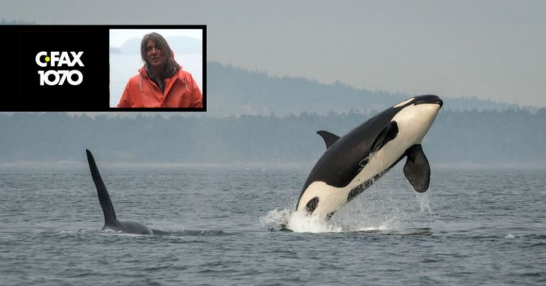 Interview: Southern Resident killer whales, fisheries, whale watching and the need for enforcement