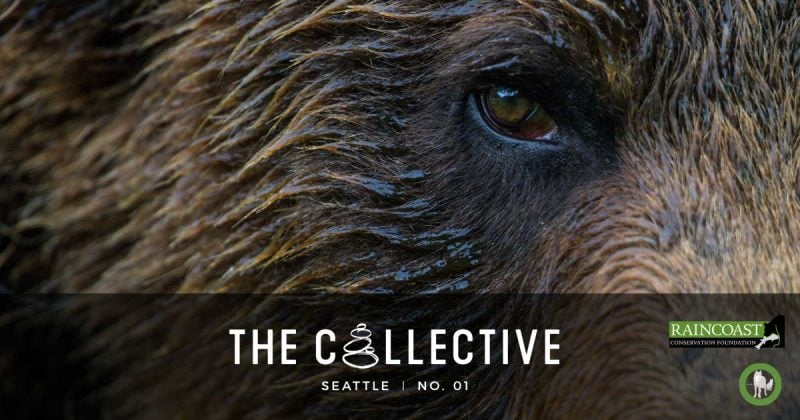 coastal carnivore conservation in the pacific northwest the collective seattle