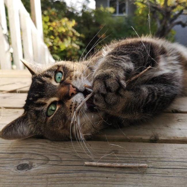 hello autumn cat neighbours