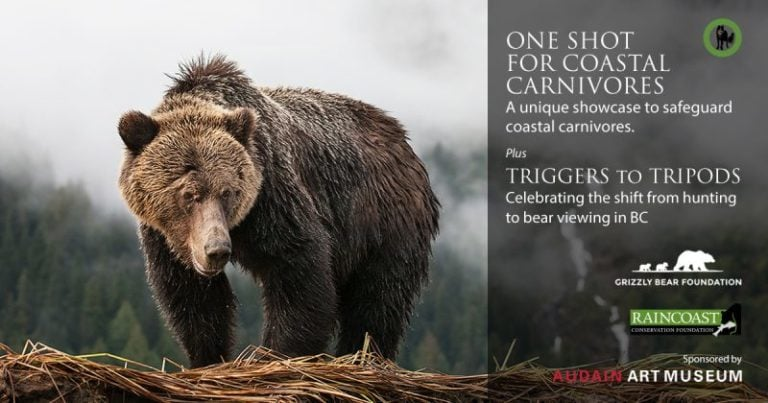 One Shot for Coastal Carnivores set to open at Audain Art Museum in Whistler