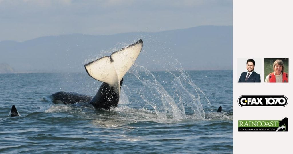 l124 is the newest member of the southern resident killer whales
