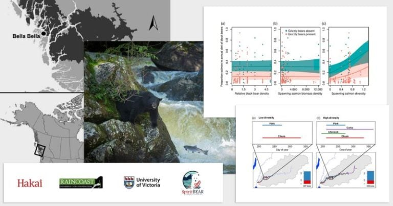 Salmonid species diversity predicts salmon consumption by terrestrial wildlife