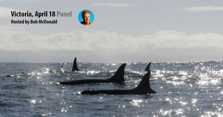Panel: the future of Killer Whale recovery