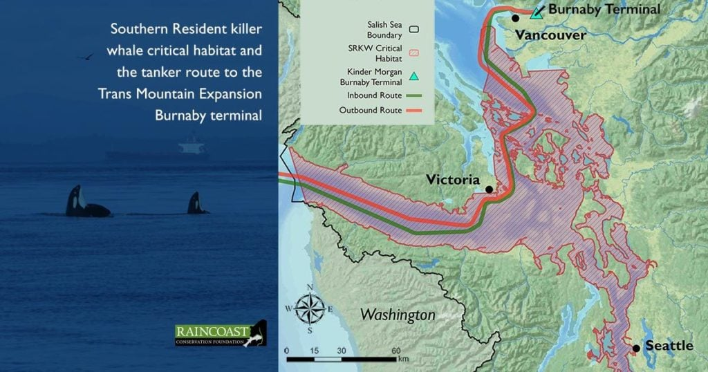 raincoasts new evidence on southern resident killer whales for the national energy boards reconsideration of the trans mountain expansion