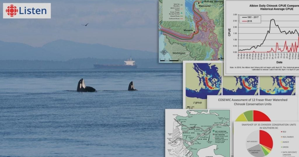 the national energy board and killer whales on as it happens