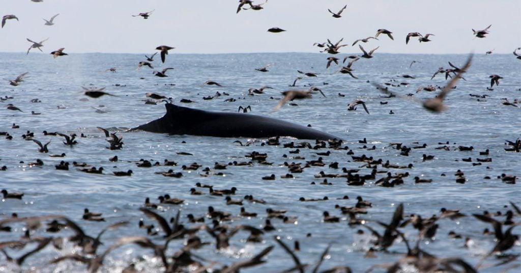 ecological legacy of coastal b c hangs in the balance