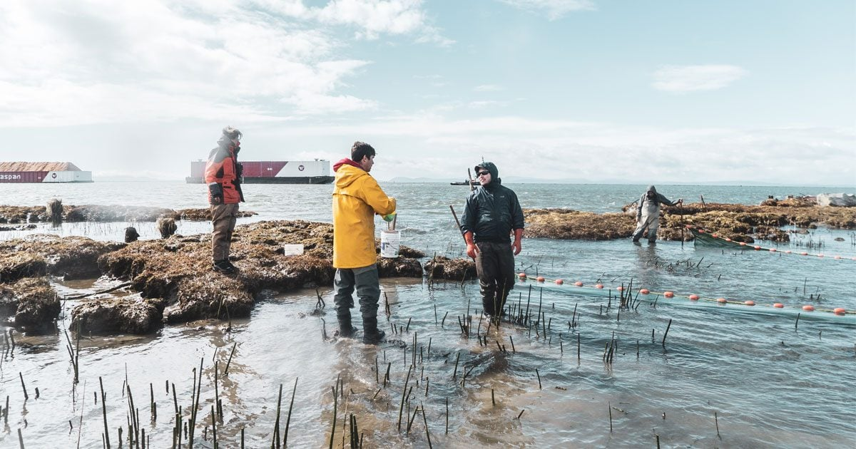 great news juvenile salmon moving through habitats reconnected after 100 years