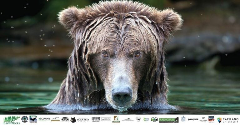 Co-existence a focus for this year's BC Bear Day