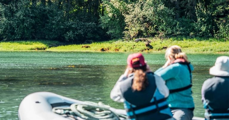A new way to help us end trophy hunting in the Great Bear Rainforest