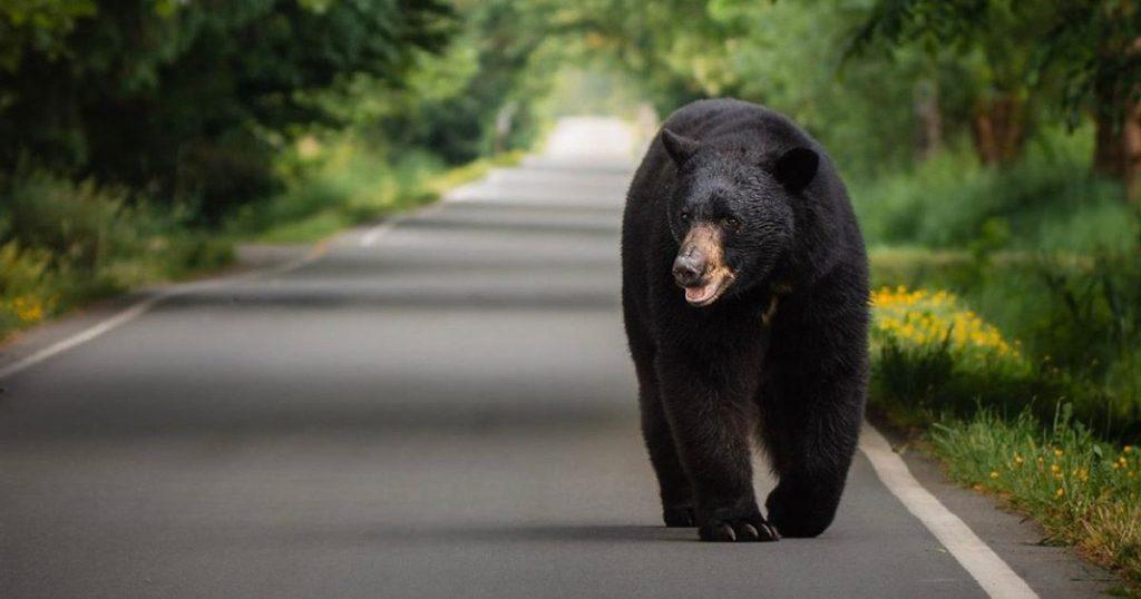 b c s human wildlife conflict response needs reform