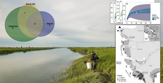 research habitat use by juvenile salmon other migratory fish and resident fish species underscores the importance of estuarine habitat mosaics