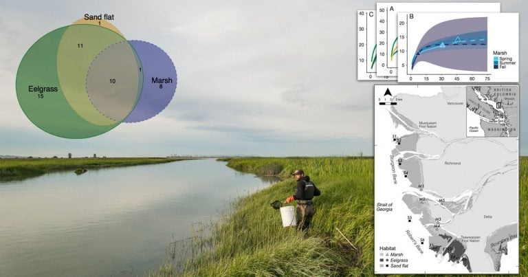 Research: Habitat use by juvenile salmon, other migratory fish, and resident fish species underscores the importance of estuarine habitat mosaics
