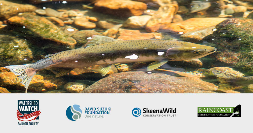 backgrounder on canadas pacific salmon fishery losing its marine stewardship council certification