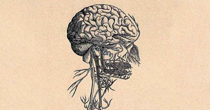science of us i now suspect the vagus nerve is the key to well being