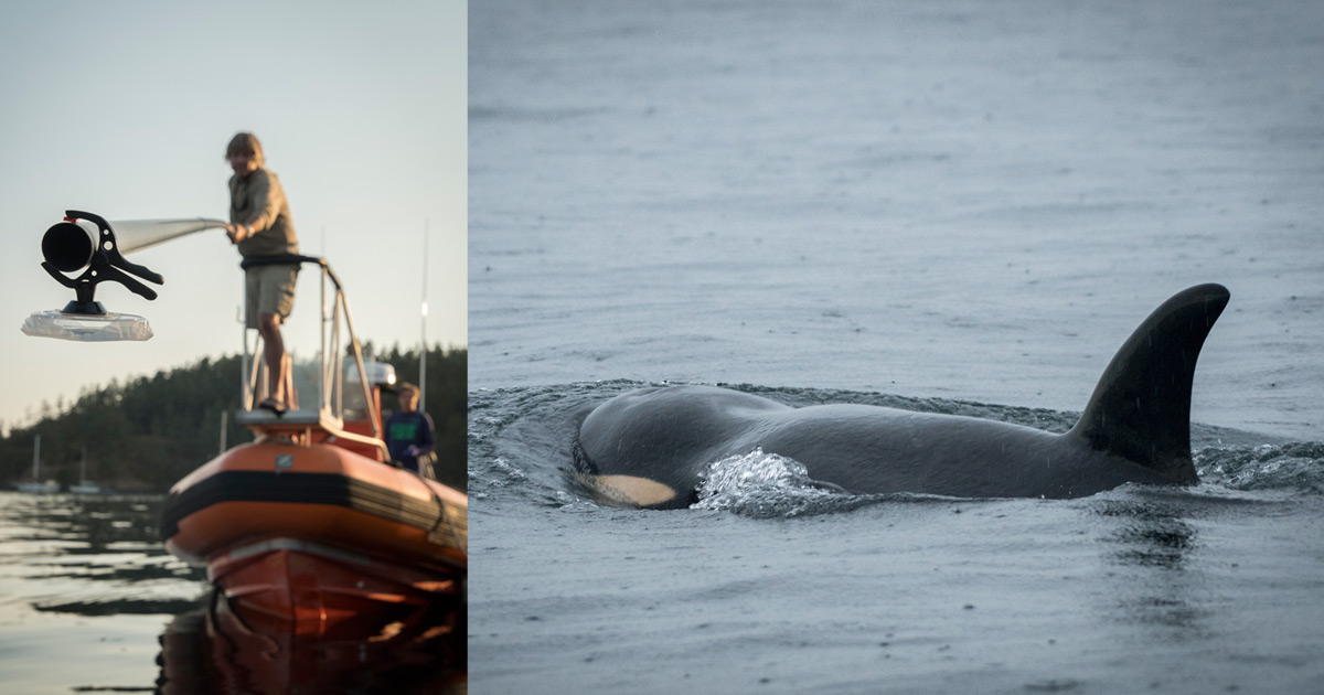 guide government action on southern resident killer whales before march 23