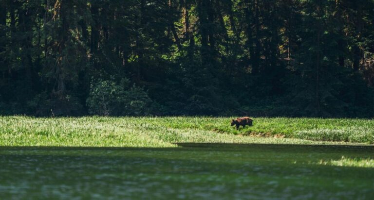 Come experience the Kitlope – the next hunting tenure where we plan to safeguard coastal carnivores