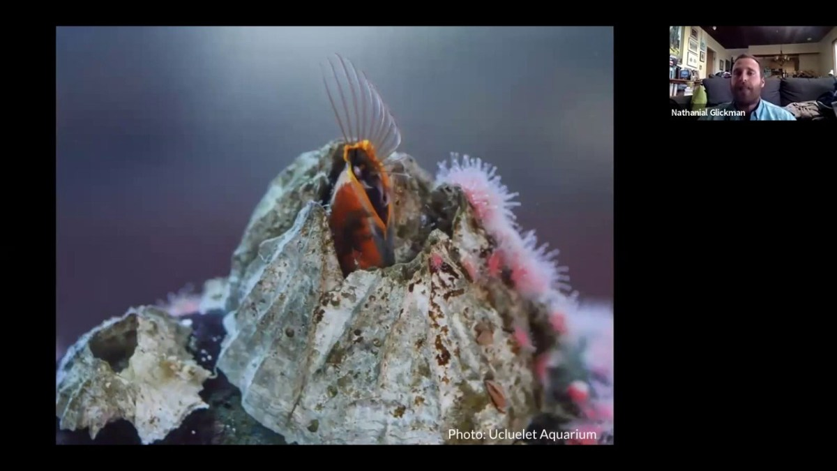 inspecting the intertidal episode 9