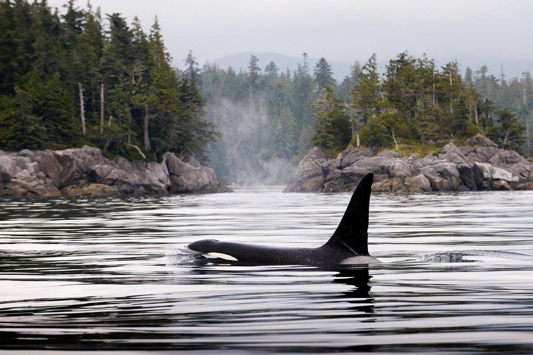 misty macduffee contributes essay to new book spirits of the coast