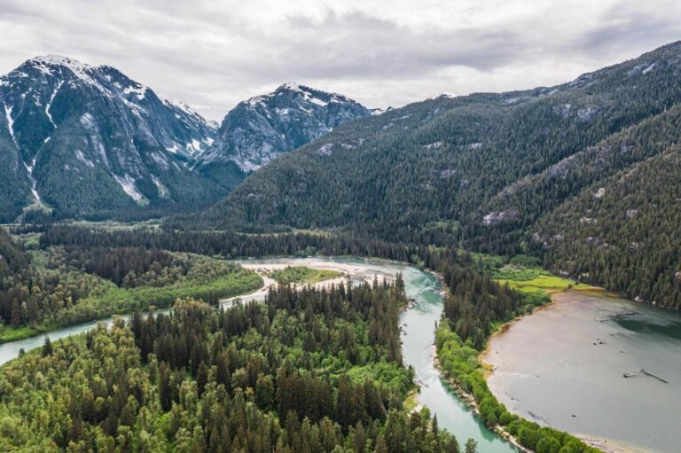 New report on the disappearance of British Columbia's old growth forests