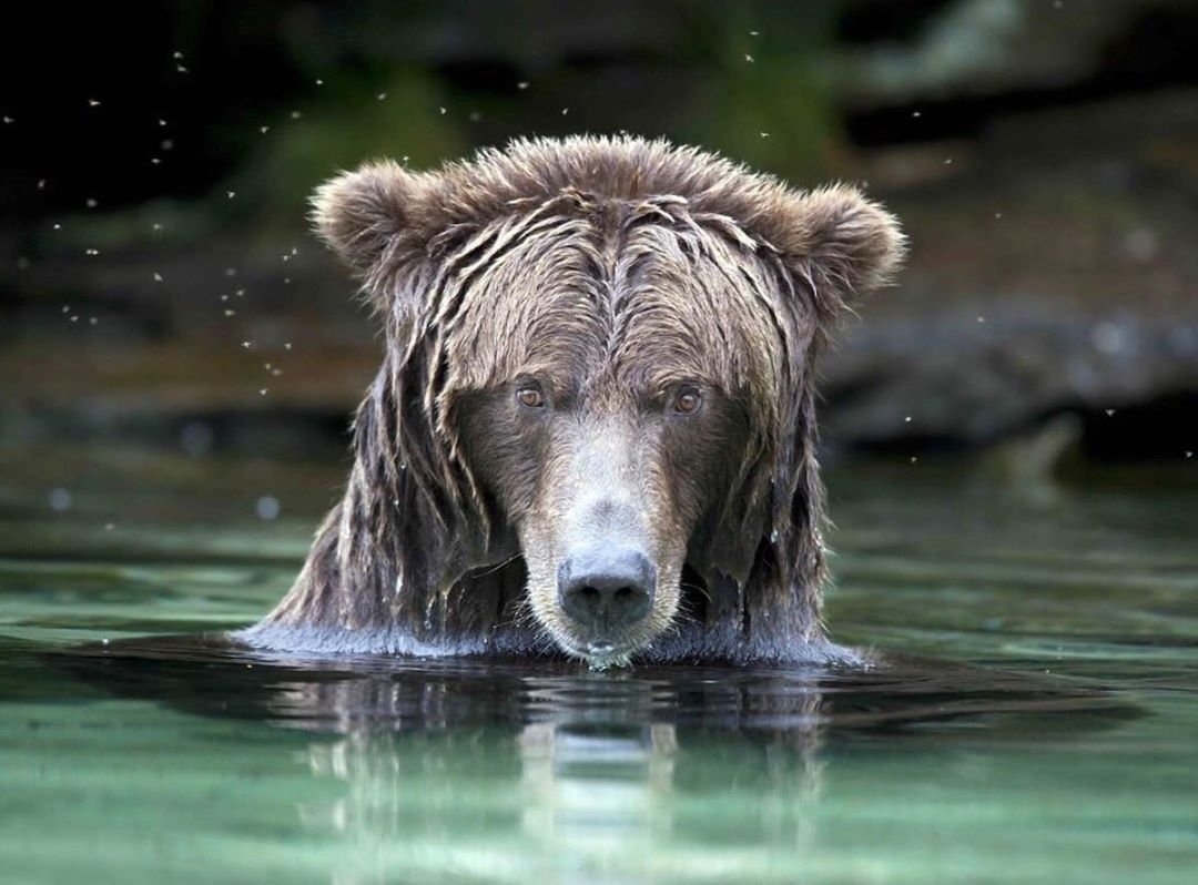 raincoast presents webinar on ethical wildlife photography
