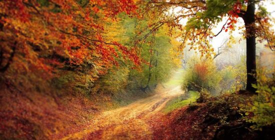 A road winds through the woods in the autumn leaves.