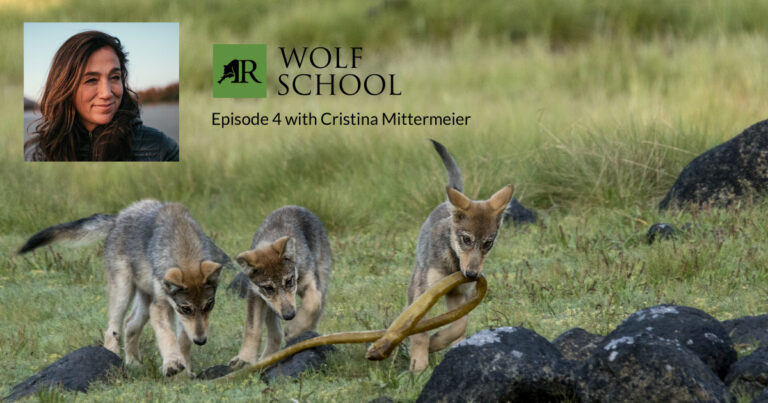 Join us for episode 4 of Wolf School with Cristina Mittermeier