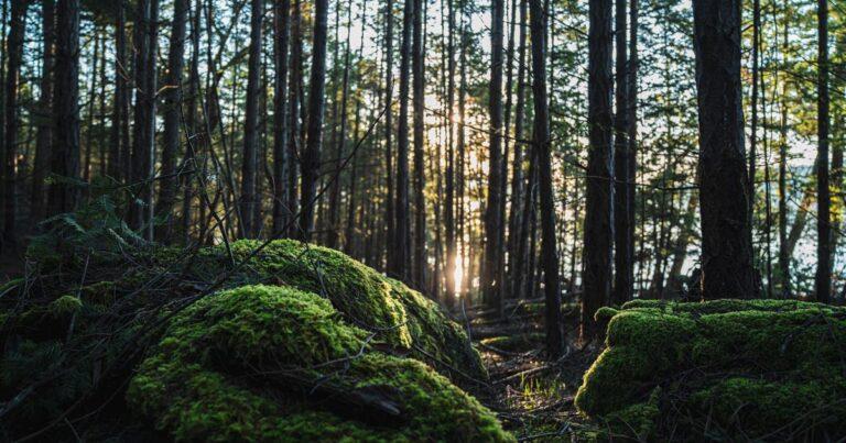Pender Islands Big Tree Registry