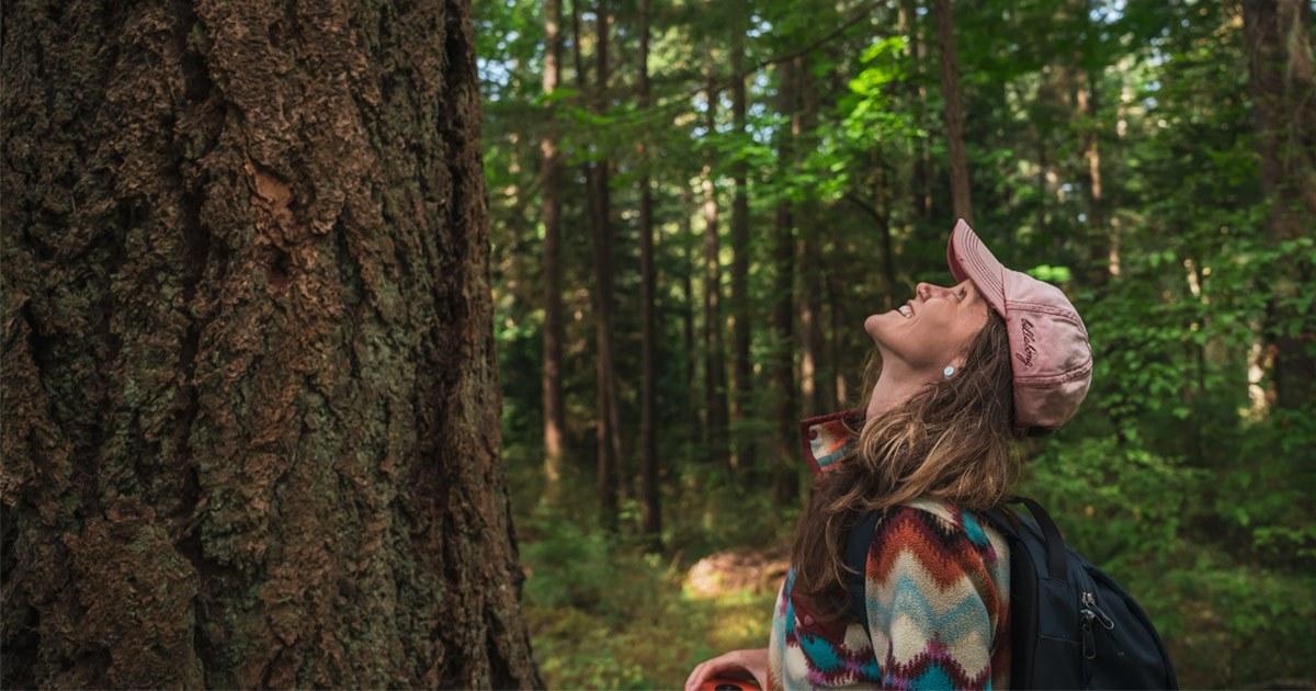 re the pender islands big tree registry update