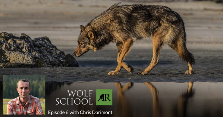 Wolf School with Chris Darimont