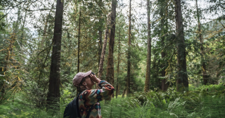 Measuring tree heights with lasers