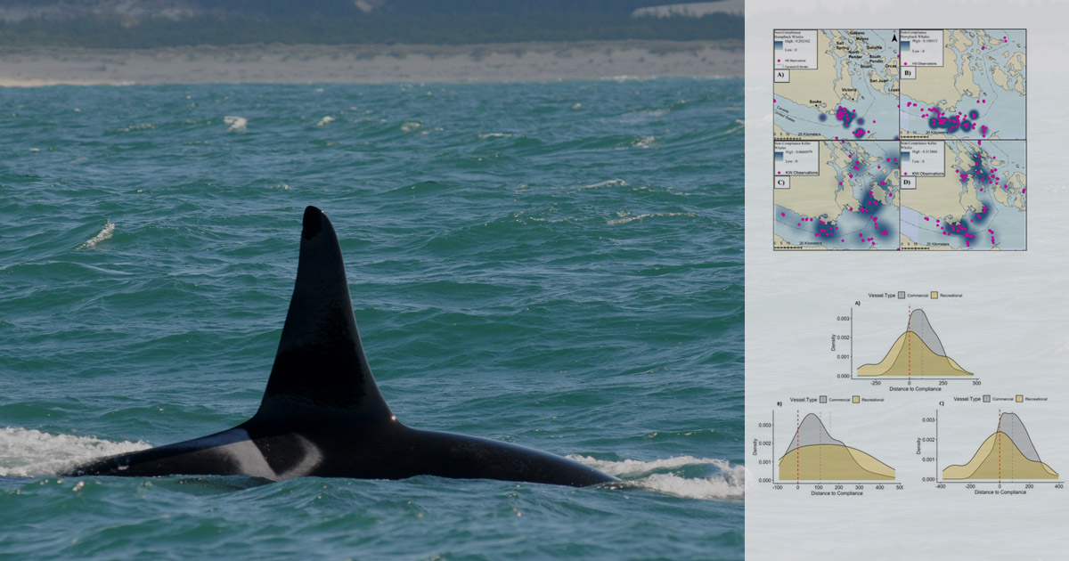 research compliance of small vessels to minimum distance regulations for humpback and killer whales in the salish sea