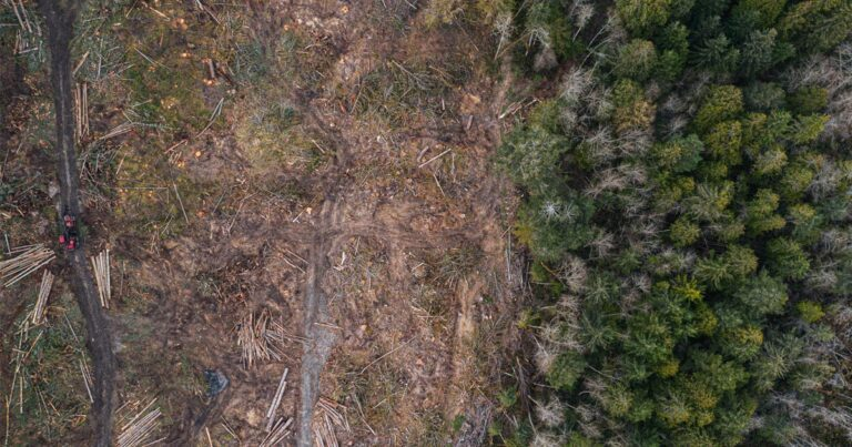 Stronger forest protection policy needed on the Gulf Islands