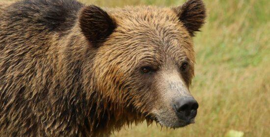 bearid