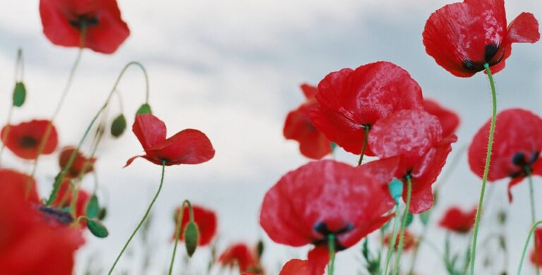 Open for regular hours on Remembrance Day