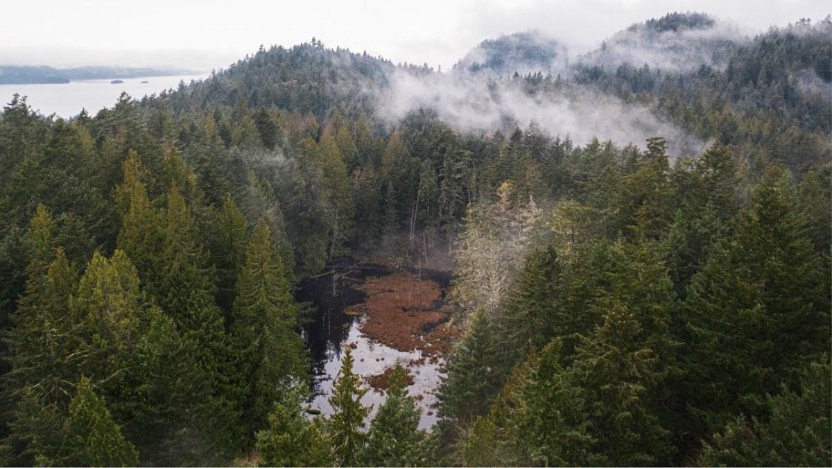 the sdayes flycatcher forest