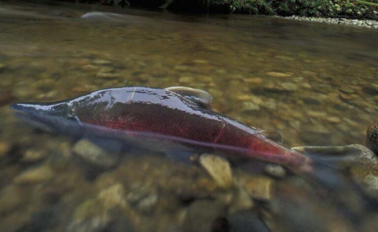 A New Vision for Salmon Monitoring and Stewardship on the Central Coast