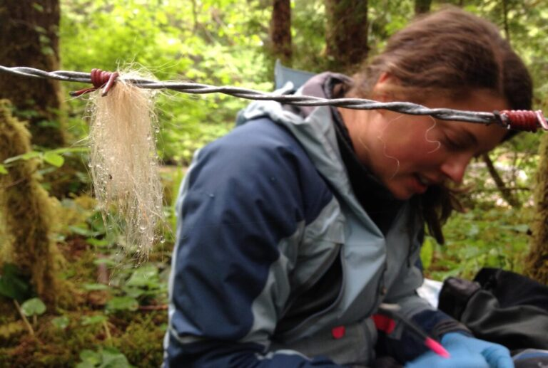 Research publication led by Dr. Christina Service honoured by the British Ecological Society
