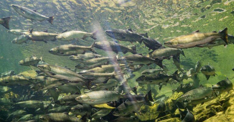 Funding habitat restoration and conservation in the Lower Fraser Region