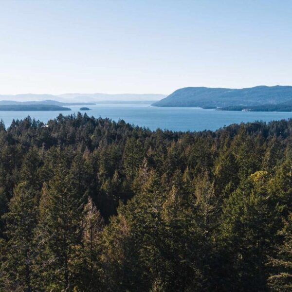 Webinar: Tree Protection in the Islands Trust